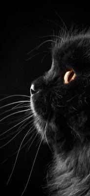 Fekete Macska Letoltes